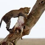 Safari Packliste Tansania