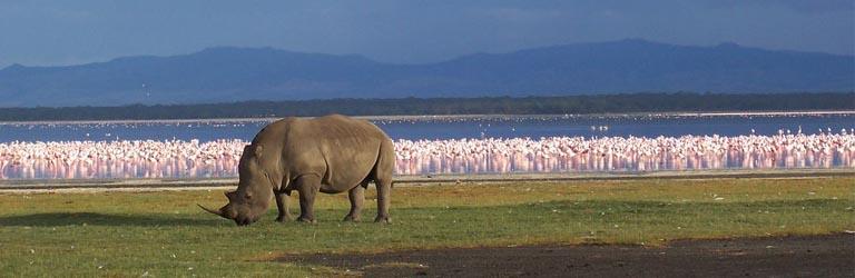 Safari Tansania Planung