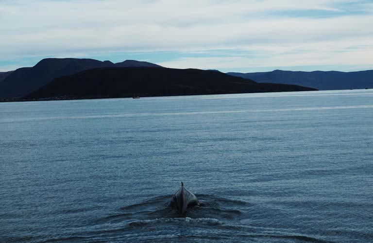 whale-watching-island-backpacking-iceland-camping-island-zelten