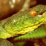 Asien Giftschlangen in Nepal Erste Hilfe Verhaltensregeln Schlangen Himalaja