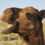 Maranjab Desert Iran Kashan Isfahan Desert Tour