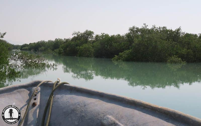 Mangrove Forrest Queshm Island Iran Geopark Qeschm Sehenswürdigkeit