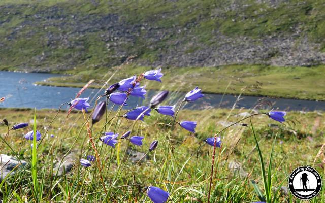 Flora Norwegen
