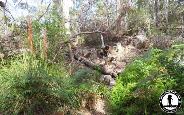 Tasmanien Wandern Packliste